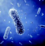 Borg & Overström Laboratory certified 99.999% bacteria-free